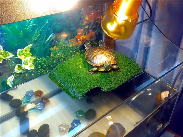 Мостик для красноухой черепахой своими руками