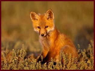 http://www.animalsprotectiontribune.ru/RisSmi011_2.JPG
