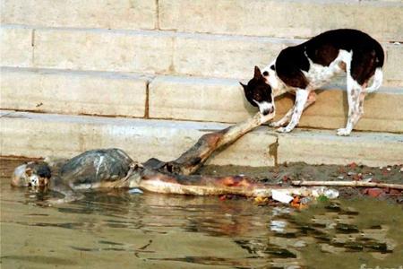 Лживые борцы за права животных НУЖНА ЛИ НАМ ИНДИЙСКАЯ ЗАРАЗА