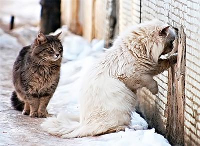 ВМордовии могут запретить замуровывать кошек вподвалах многоэтажек