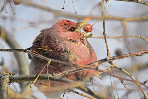 Почему нельзя истреблять птиц